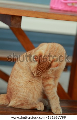 Beautiful ginger cat/Ginger cat sitting under a table outdoors in the summer