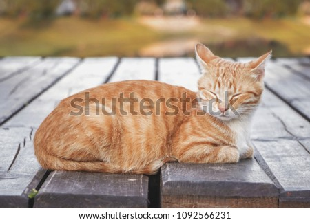 Beautiful ginger tabby cat with screwed-up eyes is lying on the wooden floor. Orange cat is sleeping on the open air, outside, on blue green background