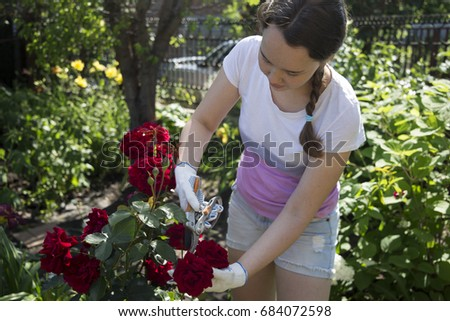 Beautiful girl at the dacha shearing roses #684072598