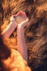 Beautiful girl in a wheat field. Natural sunlight during sunset