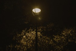beautiful glowing street lamp in the park at night