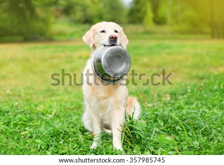 Photo of  Beautiful Golden Retriever dog holding in teeth a bowl on grass