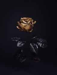 Beautiful golden rose flower with black leaves isolated on a dark black background. Creative Halloween or mystery concept. Elegant love and passion floral idea.