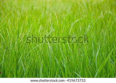 Beautiful grass #419673733