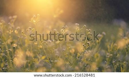 beautiful Grass flower in shallow dept of field #216528481