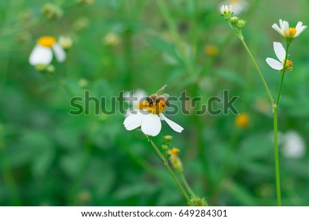 Beautiful grass flowers backgroundny white daisies little white beautiful grass flowers backgroundny white daisies little white flowers mightylinksfo