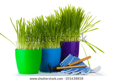 beautiful grass in a flowerpots, garden tools and gloves isolated on white