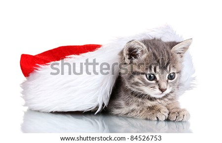 Beautiful gray kitten and Christmas hat isolated on white