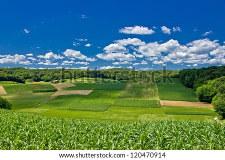 Beautiful green agricultural landscape in Croatia, corn and hay fields