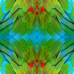 Beautiful green and red background made from Green wing macaw bird's feathers