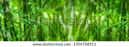 beautiful green bamboo forest in the rain, water drops on bamboo leaves, wellness day in a spa, idyllic bamboo jungle background, fresh idyll in rain forest, green nature concept with copy space