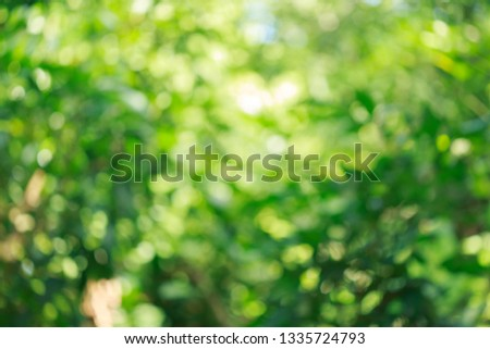 beautiful green bokeh light in summer nature, abstract blur image background #1335724793