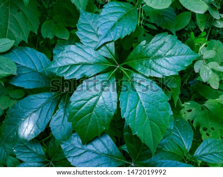 beautiful green bush leaves deep in the forest glisten in the sun