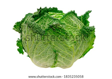 beautiful green cabbage isolated on white background Photo stock ©