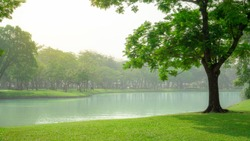 Beautiful green carpet grass and big tree on smooth lawn yard beside a lake, plenty of trees on background under white cloudy sky, a good maintenance landscapes in the park
