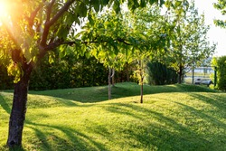 Beautiful green english fruit tree garden with mown grass lawn hills, knolls and hilloks at warm evening sunset day time. Landscape design , maintenance, service and gardening