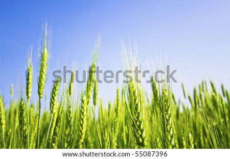 Beautiful green field and blue sky in spring
