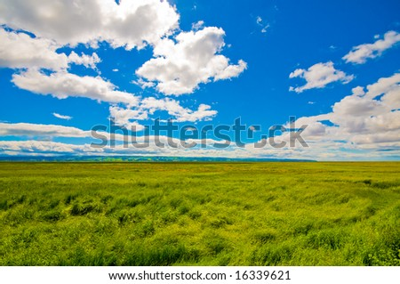 Beautiful green field, blue sky and white clouds