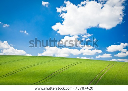 beautiful green field during springtime