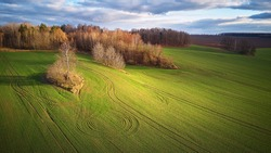 Beautiful green field. Winter cereal and blue, cloudy autumn sky. Sowing wheat, crop before hibernation. Spring rural Rolling Hills. Picturesque November landscape. Agricultural light and shadow scene