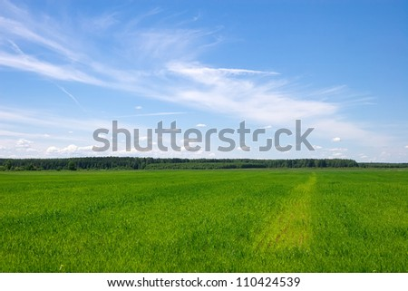 Beautiful green field with blue sky during summer day