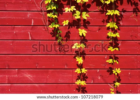 beautiful green foliage on old red wooden wall