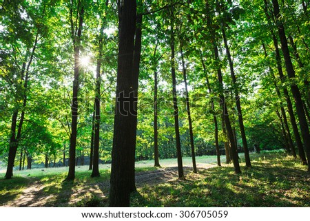 beautiful green forest with sunlight - Shutterstock ID 306705059