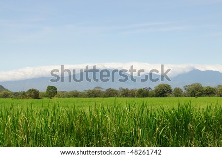 Beautiful green grass field with a bright blue sky and mountains with white clouds in the background