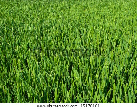 stock photo : Beautiful green grass in early spring - useful as background