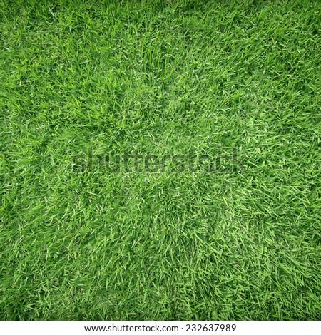 Beautiful green grass texture - Shutterstock ID 232637989