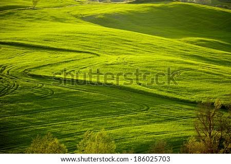 Beautiful green hills in Tuscany, Italy.  #186025703