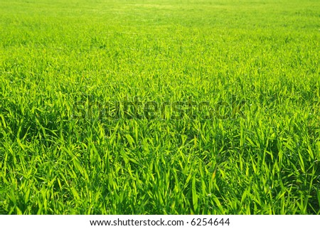 Beautiful green lawn freshly mowed