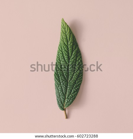 Beautiful green leaf on pastel background. Minimal nature concept. Flat lay.