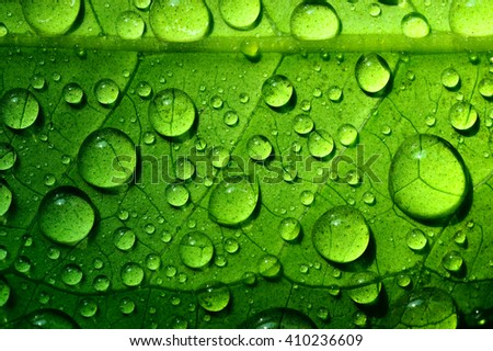 Beautiful green leaf texture with drops of water #410236609