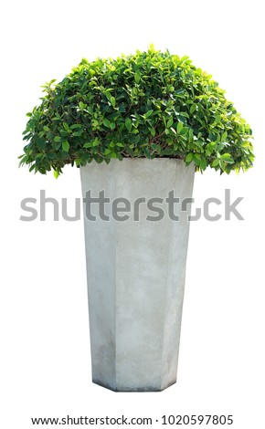 Beautiful green leaf with cement flowerpot on isolated white background and Clipping path,More picture in set.