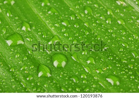 Beautiful green leaf with drops of water close-up