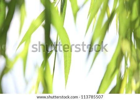beautiful green leaves on bright background