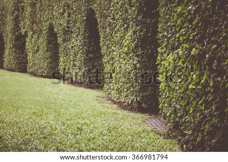 Beautiful green leaves wall background on summer day. Outdoor horizontal hedges with grass and arch. Vintage picture style.