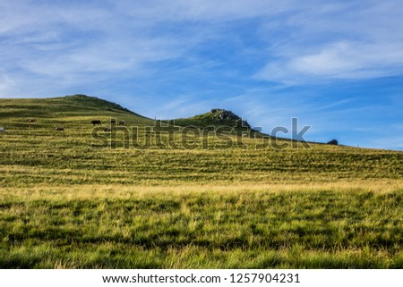 Beautiful green lush meadow in Alps Mountains. Auvergne-Rhone-Alpes. France.