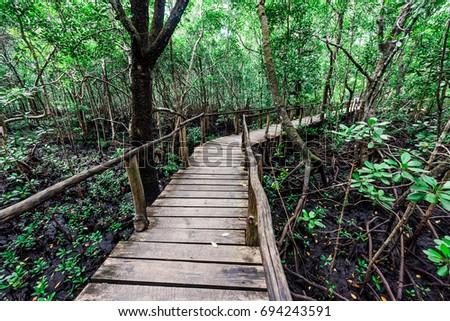 beautiful green mangrove forest with wooden path inside in Zanzibar, Africa