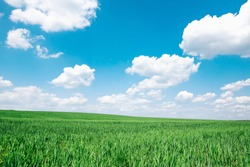 Beautiful green meadow field hill with white clouds and blue sky
