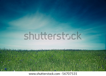 Beautiful green meadow with a great blue sky #56707531