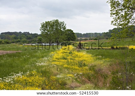 Beautiful green meadow with tree, pond, yellow and white wildflowers.
