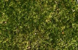 Beautiful green moss background. Close up. Pattern. Top view