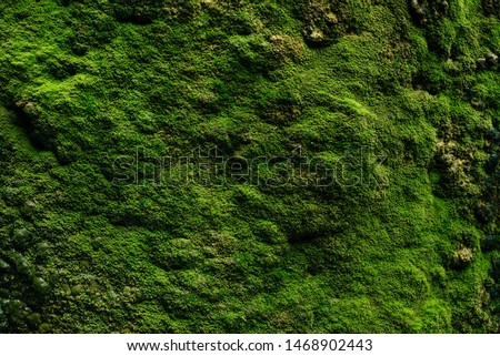 Beautiful green moss close up, Moss texture, Moss abstract background.