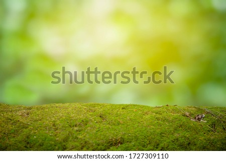 Beautiful green moss on the floor. background of moss for wallpaper.
