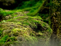 Beautiful green moss on the floor, moss closeup, macro. Beautiful background of moss for wallpaper.