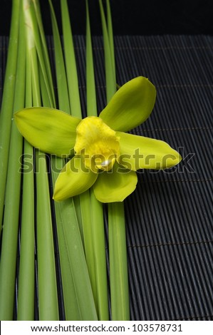 Beautiful green orchid and green plant on mat