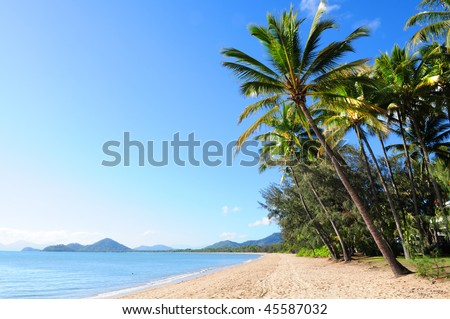 Beautiful green palm trees at tropical beach Palm Cove in Queensland, Australia