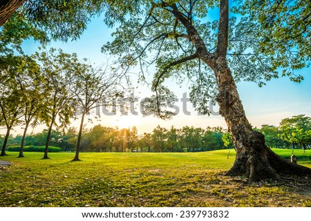 Beautiful green park, Public park with green grass field and tree
